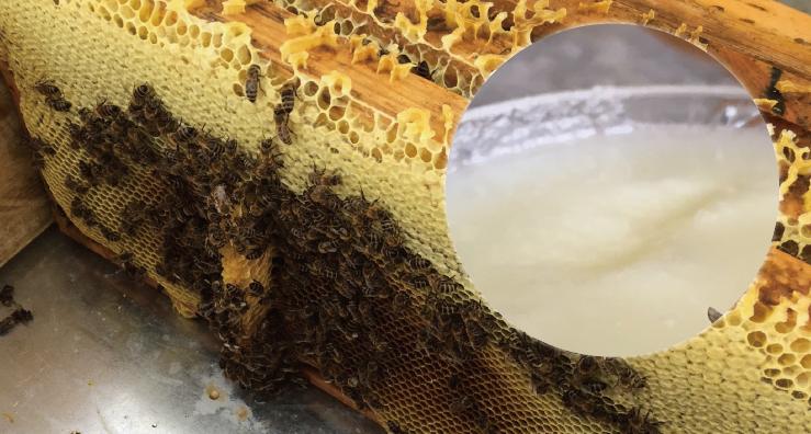 蜂蜜界のロールスロイス「エスパルセットの蜂蜜」