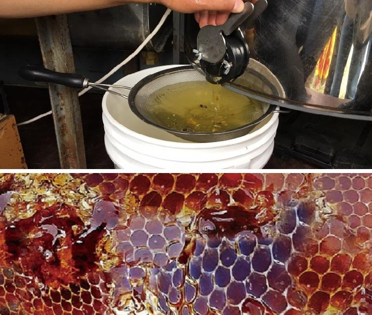 蜜源となるESPARCETTE(エスパルセット)から、非常に自然の衛生環境が整った中で採蜜しました。